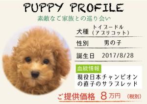 犬紹介_アプリ2