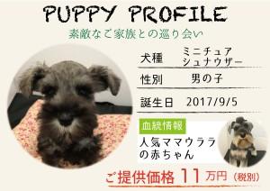 犬紹介_ウララ
