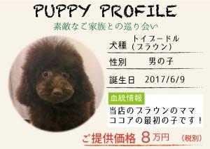 犬紹介_ブラウン