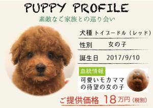 犬紹介_moka1